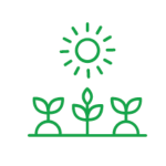 icon growing vegetables in sunshine