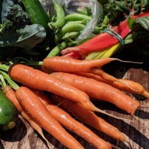 photo of fresh carrots